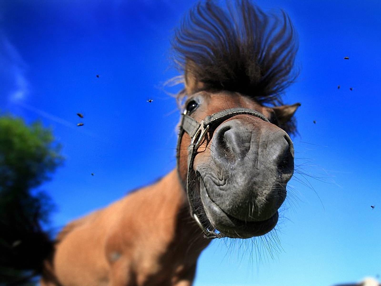 Картинки по запросу смешные картинки про лошадей