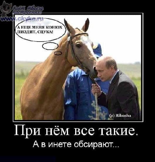 смешные картинки про лошадей