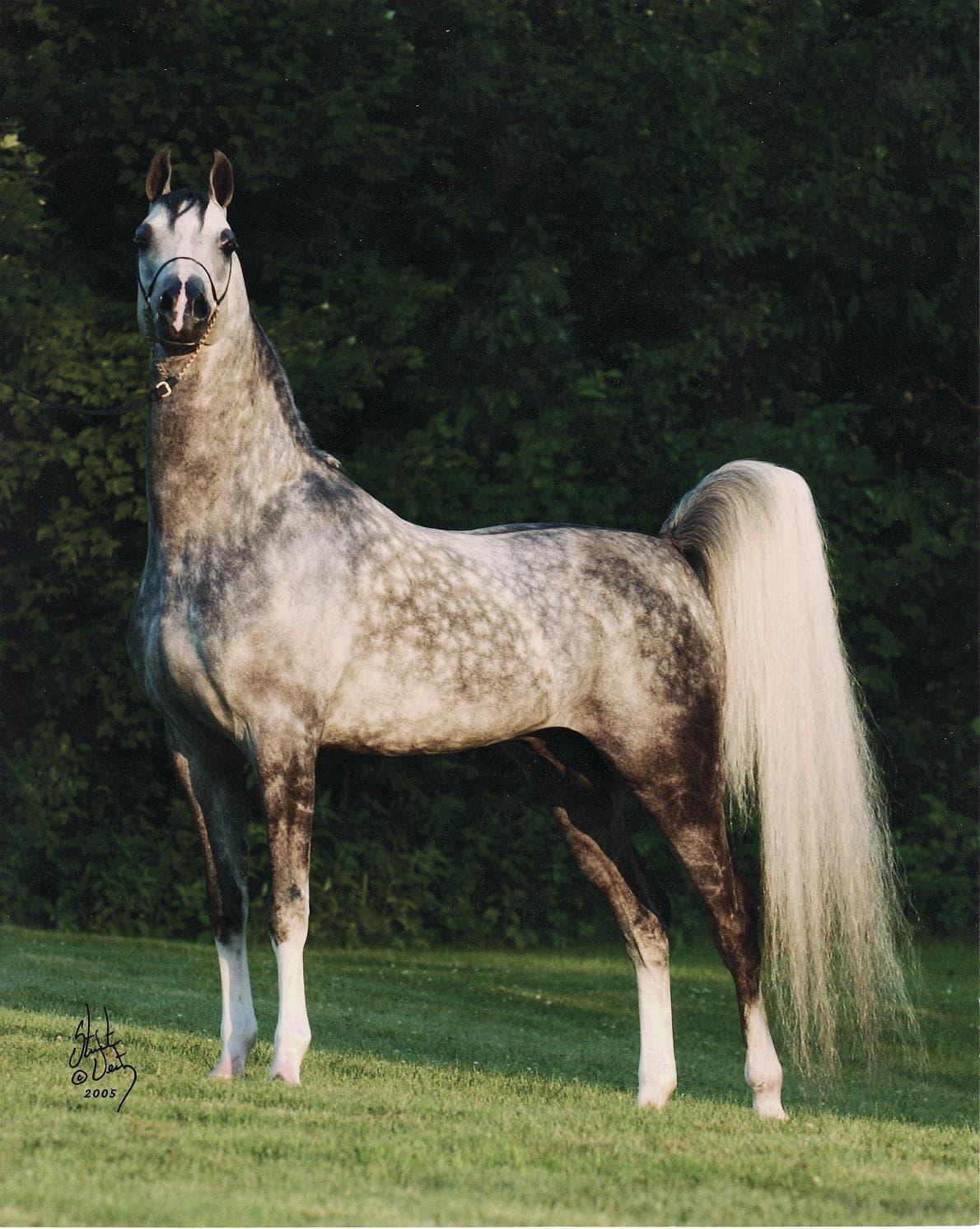 Секс в конюшне с конюхом 12 фотография