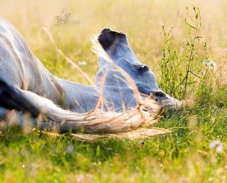 Подборки фотографий с лошадьми