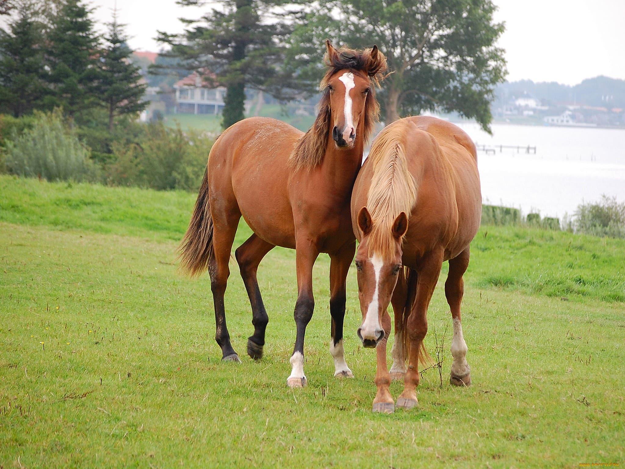 Старый и молодой кони 26 фотография