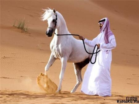 Арабка белая)) » Фото лошадей » Сайт о лошадях KoHuKu.
