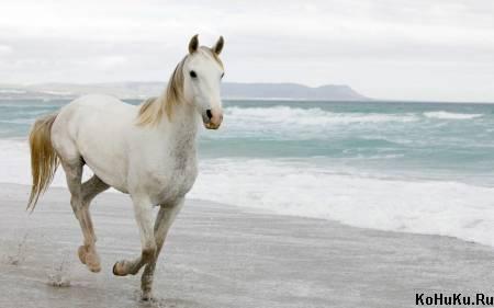 Скачать песню путин едет на коне