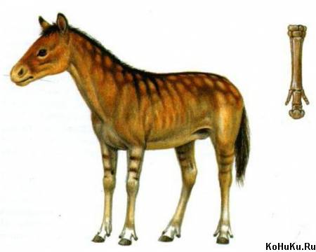 Pliohippus