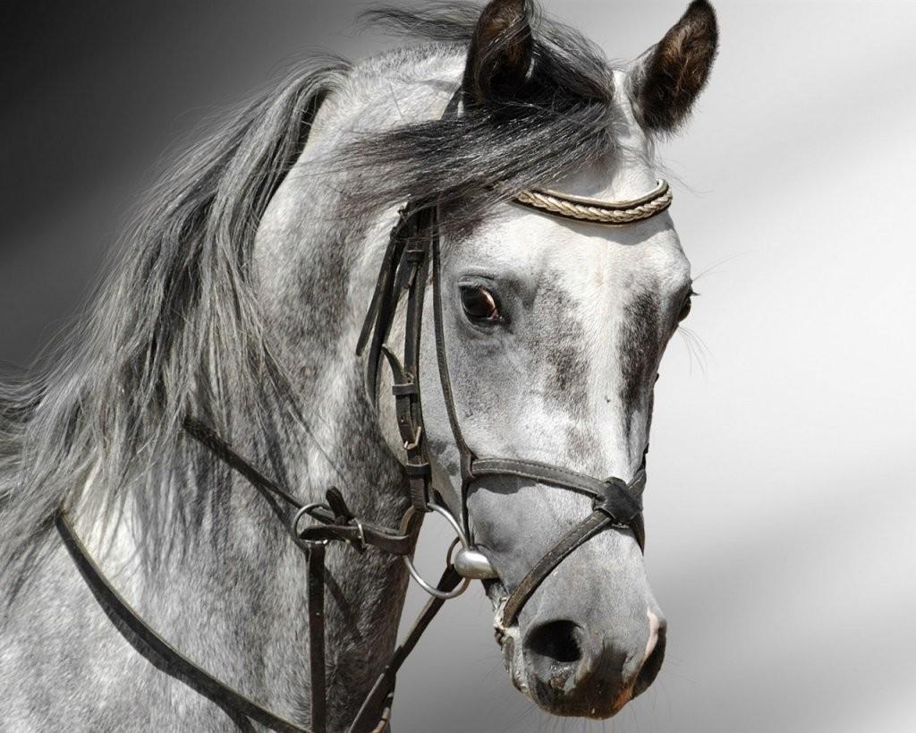Фото коня
