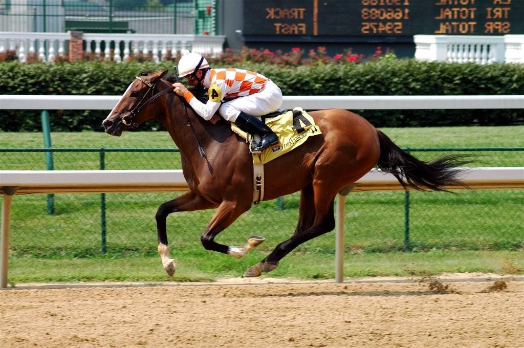 Фото лошади чистокровной верховой породы гнедой масти