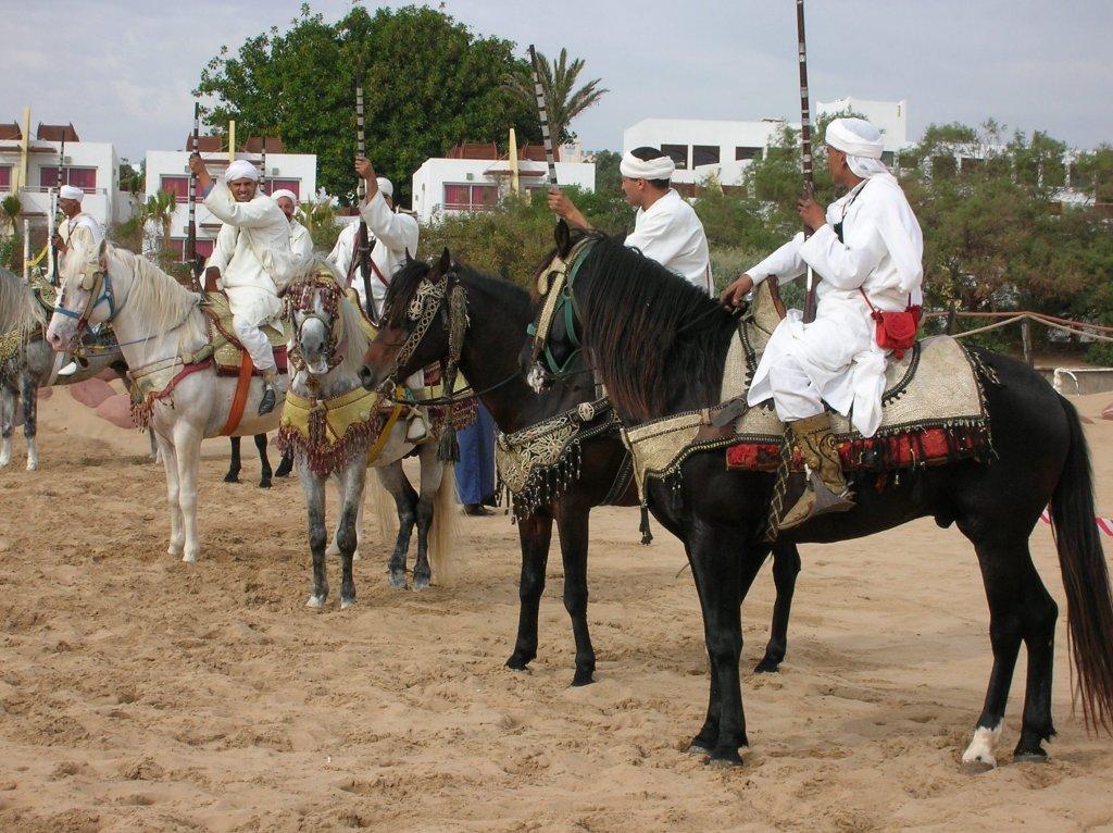 Берберийская порода лошадей: фото, описание, происхождение