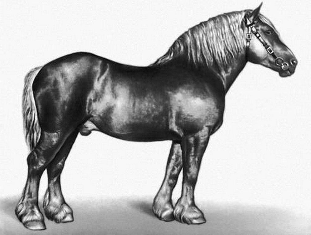 Литовская тяжеловозная порода лошадей (литовский тяжеловоз): фото, происхождение