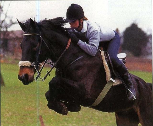Кабардинская порода лошадей: фото, описание, происхождение породы.
