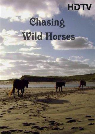 Лошади острова сейбл смотреть фильм