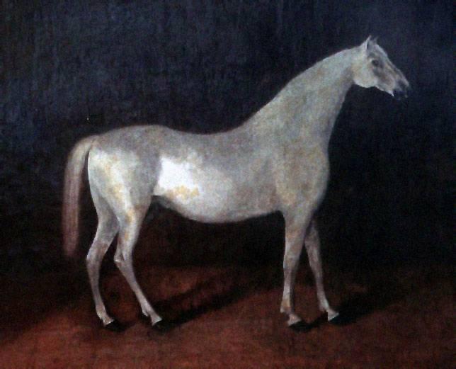 Арабский скакун  Сметанка. Рисунок 18 века.