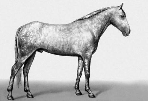 Фото лошади иомудской породы