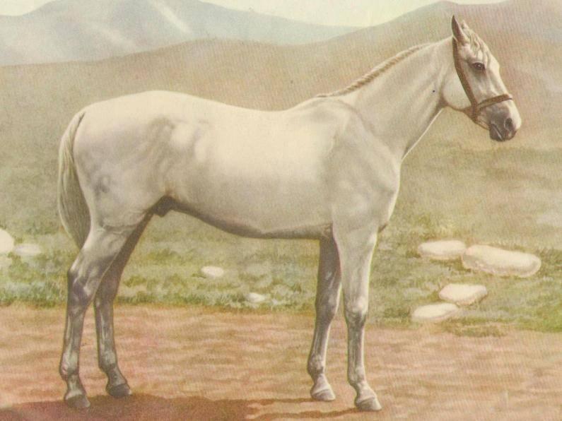 Картина с изображением лошади иомудской породы