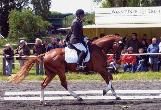 Фото лошади баварской теплокровной породы рыжей масти