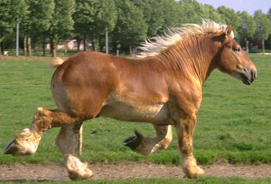 Фото лошади породы ауксуа соловой масти