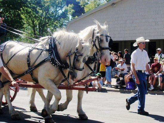 Фото лошадей американской кремовой породы золотой масти
