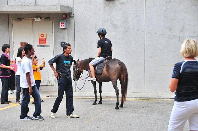 Фото пони породы Бали рыжей масти