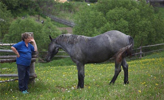 Фото лошади вороно-чалой масти