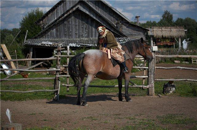 Фото лошади гнедо-чалой масти