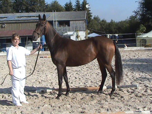 Фото лошади темно-буланой масти