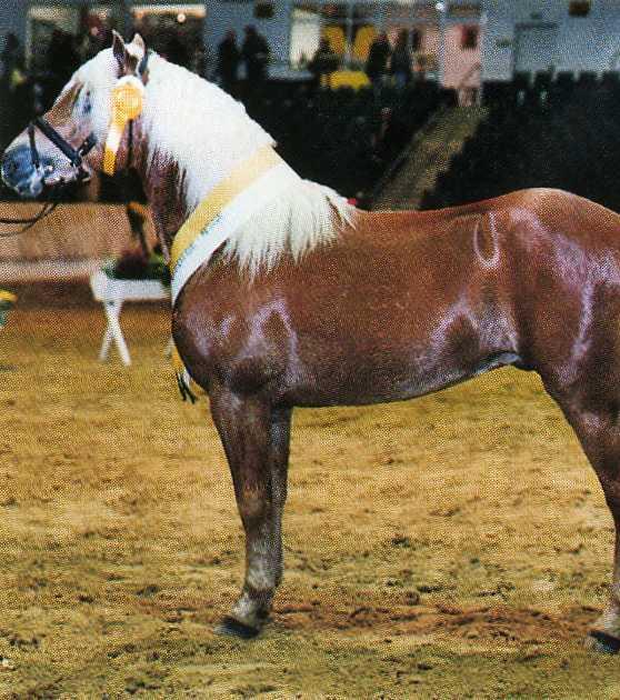 Фото лошади светло-игреневой масти