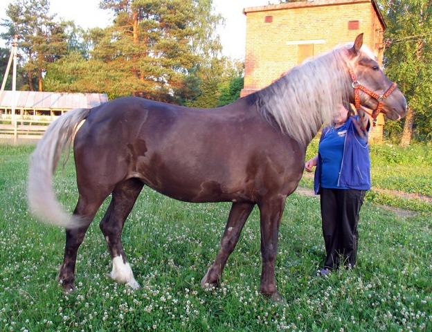Фото лошади темно-игреневой масти