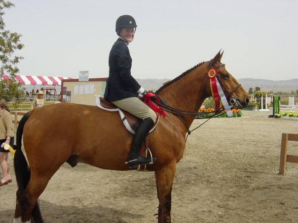 Фото лошади породы солерно гнедой масти