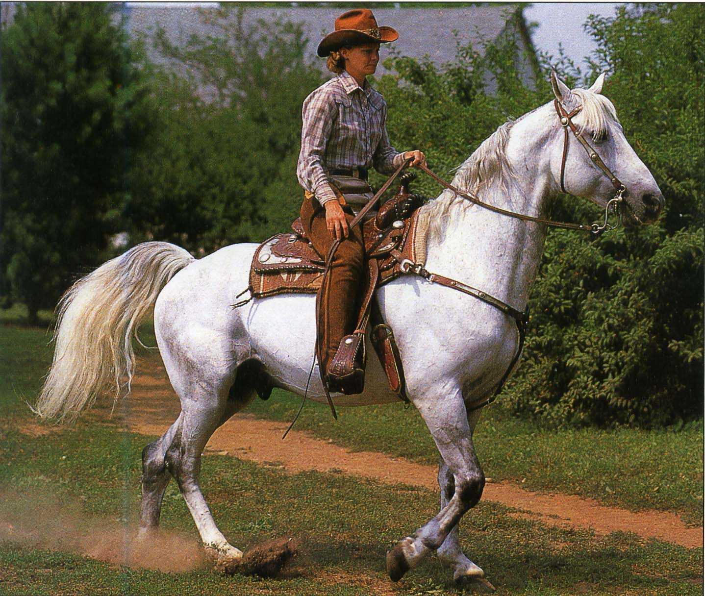 Фото лошади породы миссурийский фокстроттер серой масти