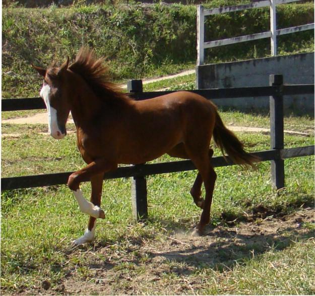 Фото лошади породы мангаларга маршадор рыжей масти