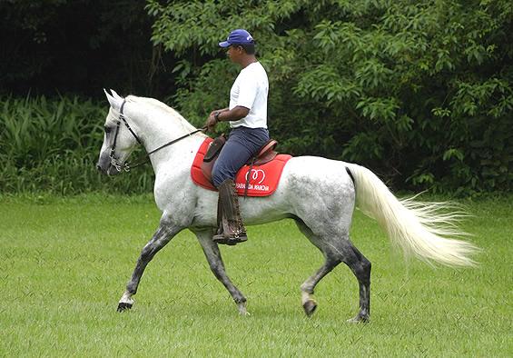 Фото лошади  породы мангаларга маршадор серой масти