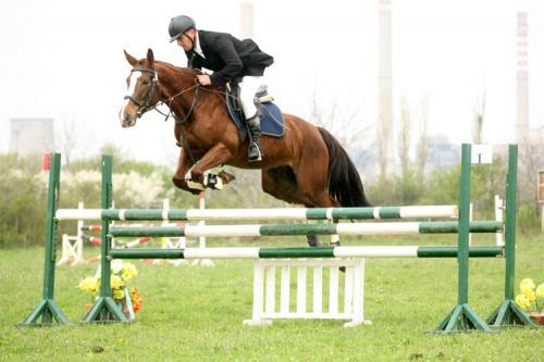 Фото лошади породы плевен рыжей масти