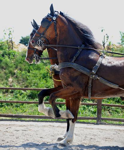 Реферат На Тему Селекция Лошадей