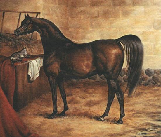 Годольфин-Арабиан: история жизни знаменитой лошади.