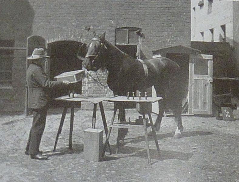 яндекс фото лошади 5