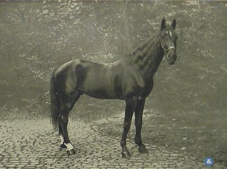 Фото лошади по кличке Умный Ганс