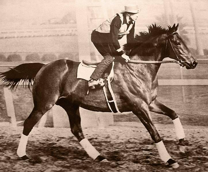 Фото лошади по кличке Сухарь (Seabiscuit)