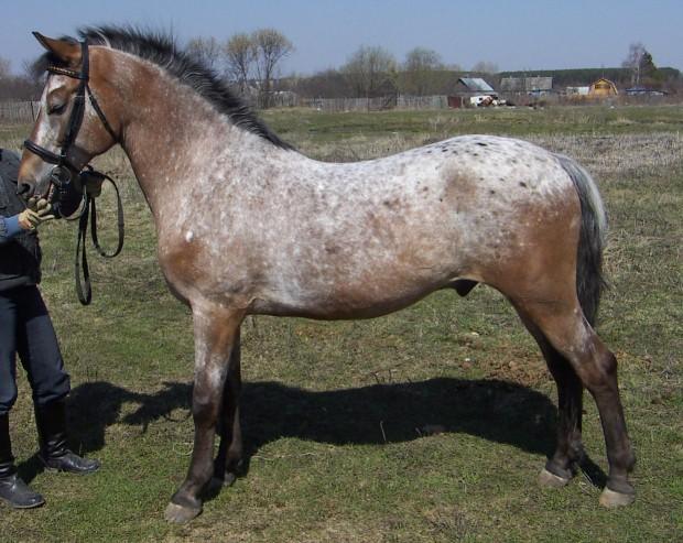 Фото лошади гнедо-чубарой в инее масти