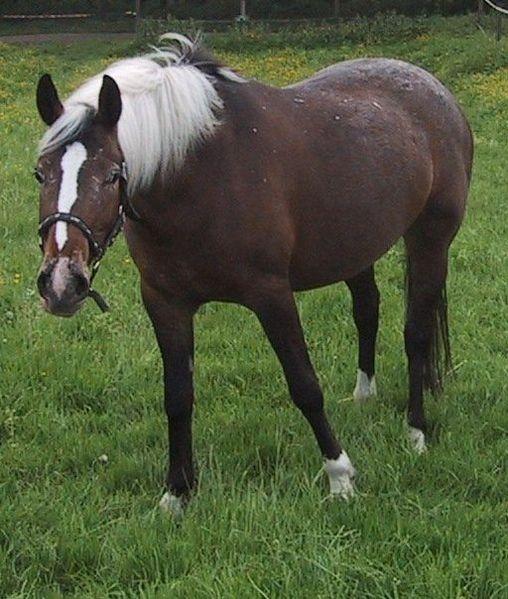 "Фото лошади игреневой ""в инее"" масти"