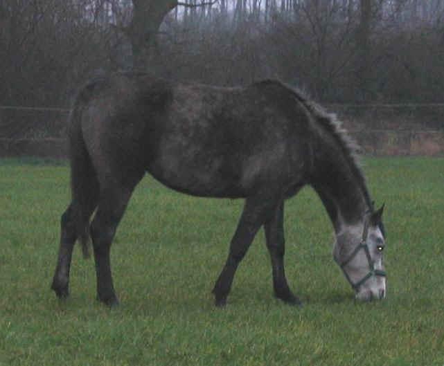 Фото лошади темно-серой масти
