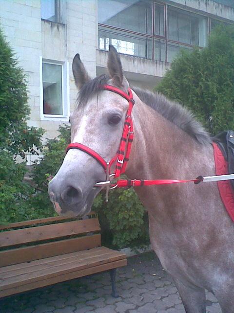 Фото лошади красно-серой масти