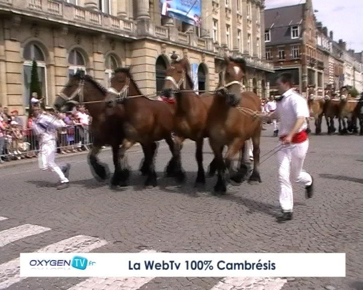Фото выставки лошадей  породы трейт ду норд гнедой масти