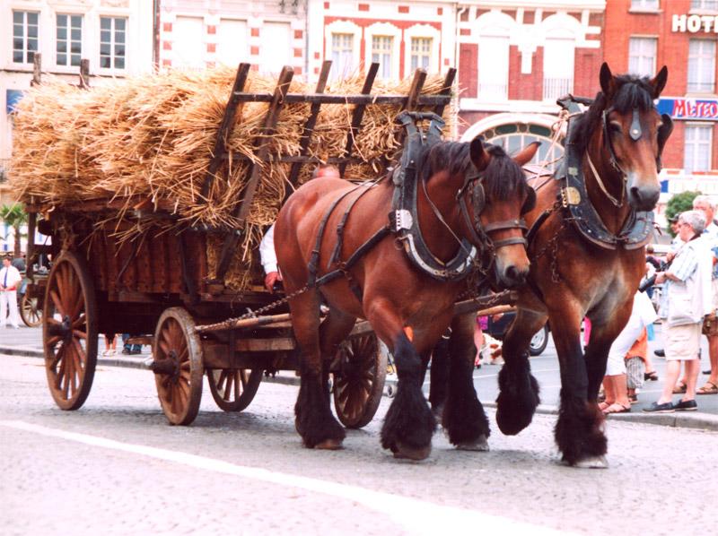 Фото двух лошадей породы трейт ду норд гнедой и гнедо-чалой масти