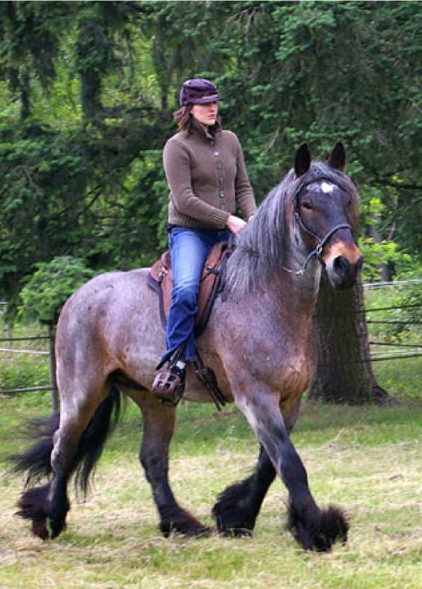 Фото лошади породы пойтеве гнедо-чалой масти