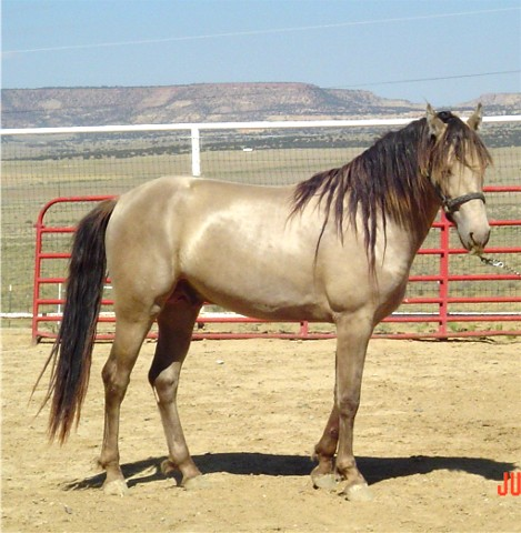 Фото лошади шампанской масти