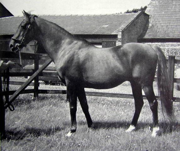 Фото лошади по кличке Гиперион