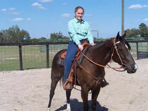 Фото лошади породы флоридский крэкер гнедой масти