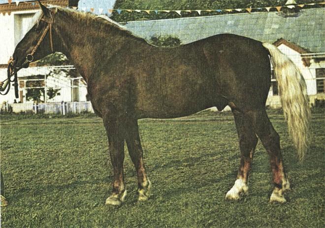 Фото лошади торийской породы игреневой масти