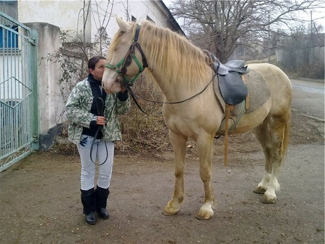 Фото лошади торийской породы изабелловой масти[
