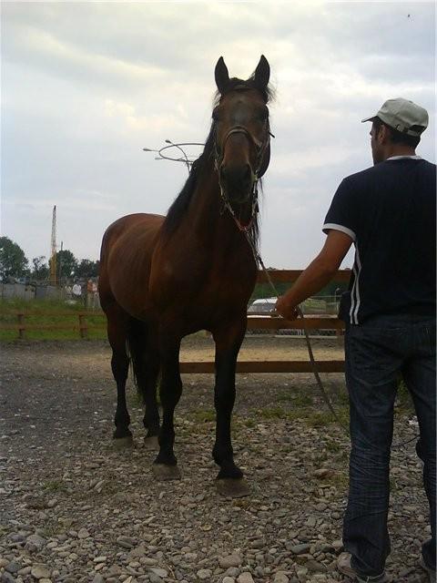Фото лошади торийской породы гнедой масти