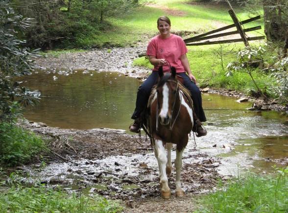 Фото виргинской горной лошади гнедо-пегой масти